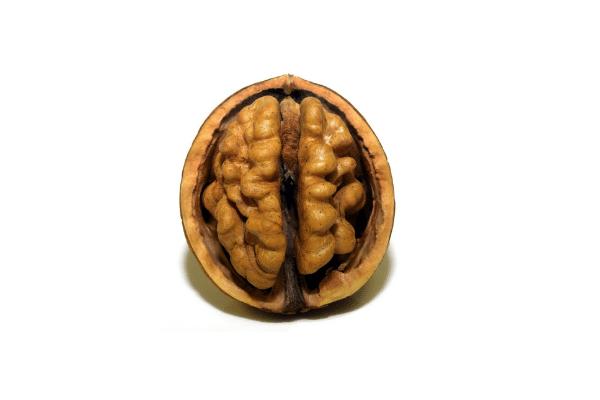 Werking van het brein bij conflicten